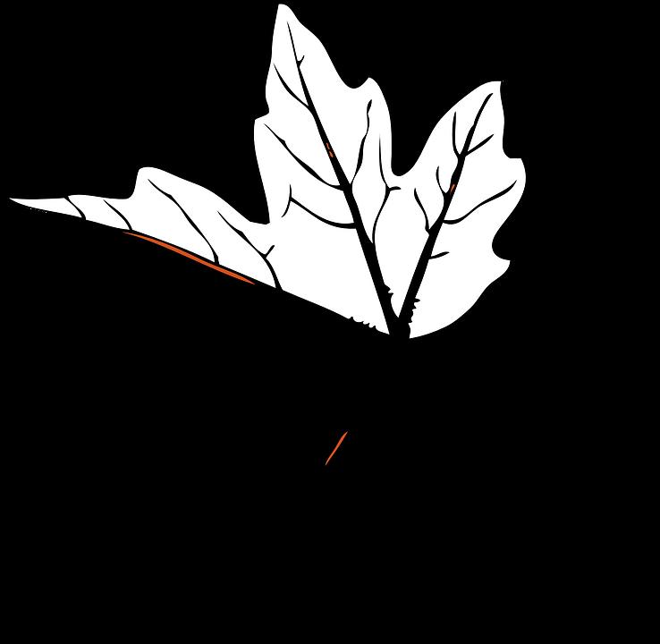 Leaf Maple Single Veins Nerves Autumn.