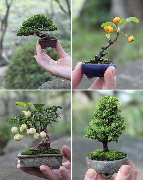 1000+ images about Flora and Fungus on Pinterest.