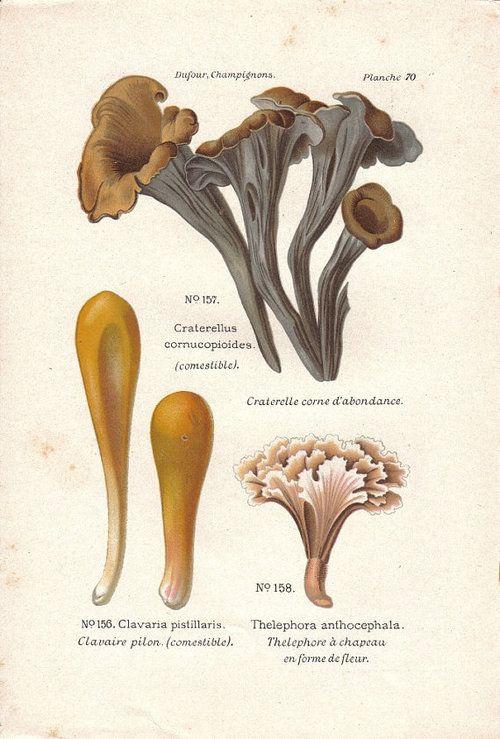 1000+ images about botanique. on Pinterest.
