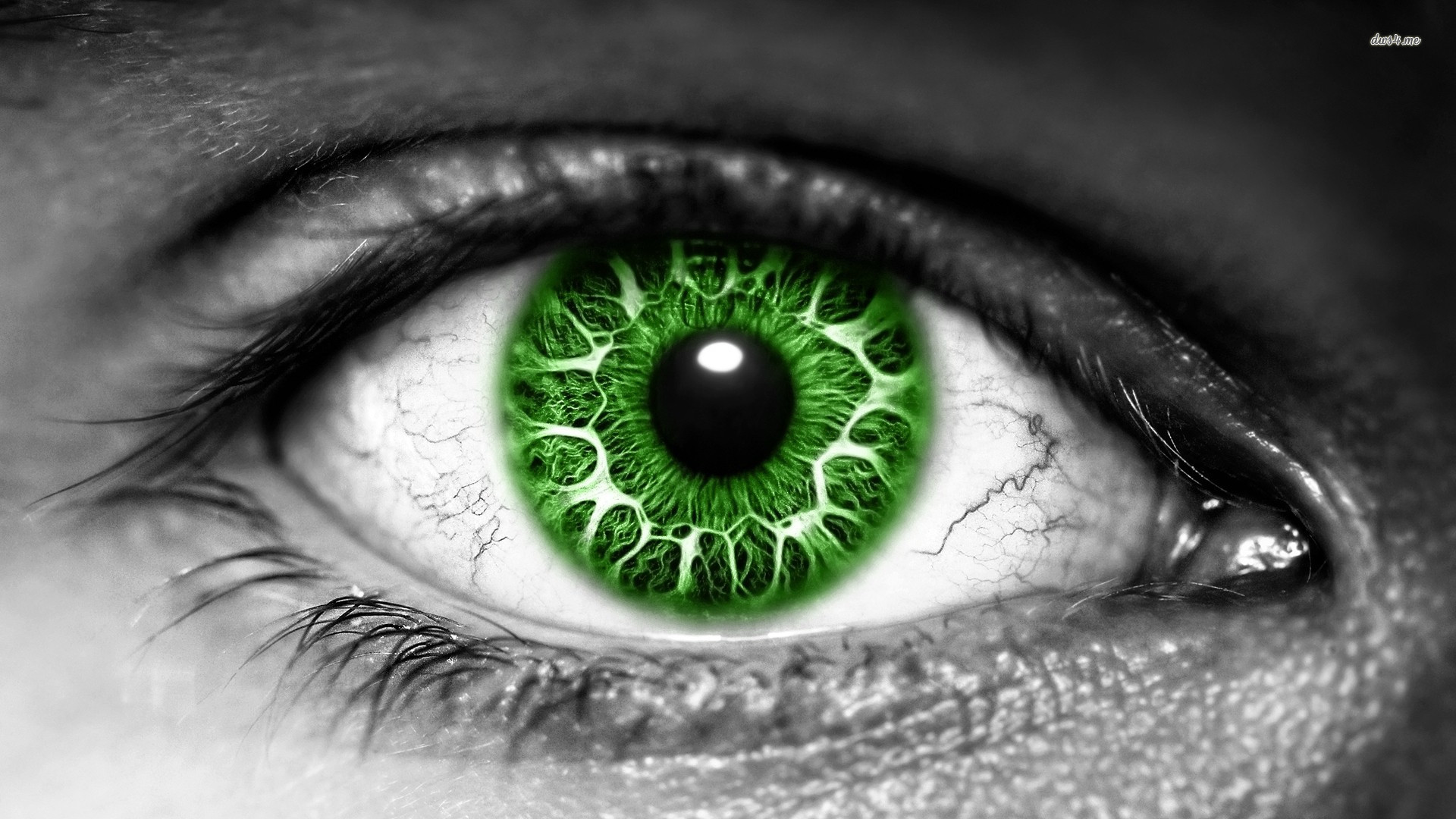 27+] Green Eye Wallpapers on WallpaperSafari.