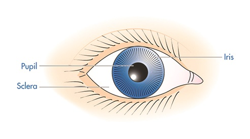 Eye disorders: understanding the causes, symptoms and.
