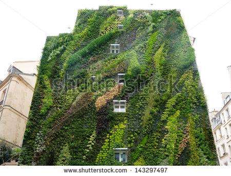 Leaves greening wall Free stock photos in JPEG (.jpg) 3648x5472.