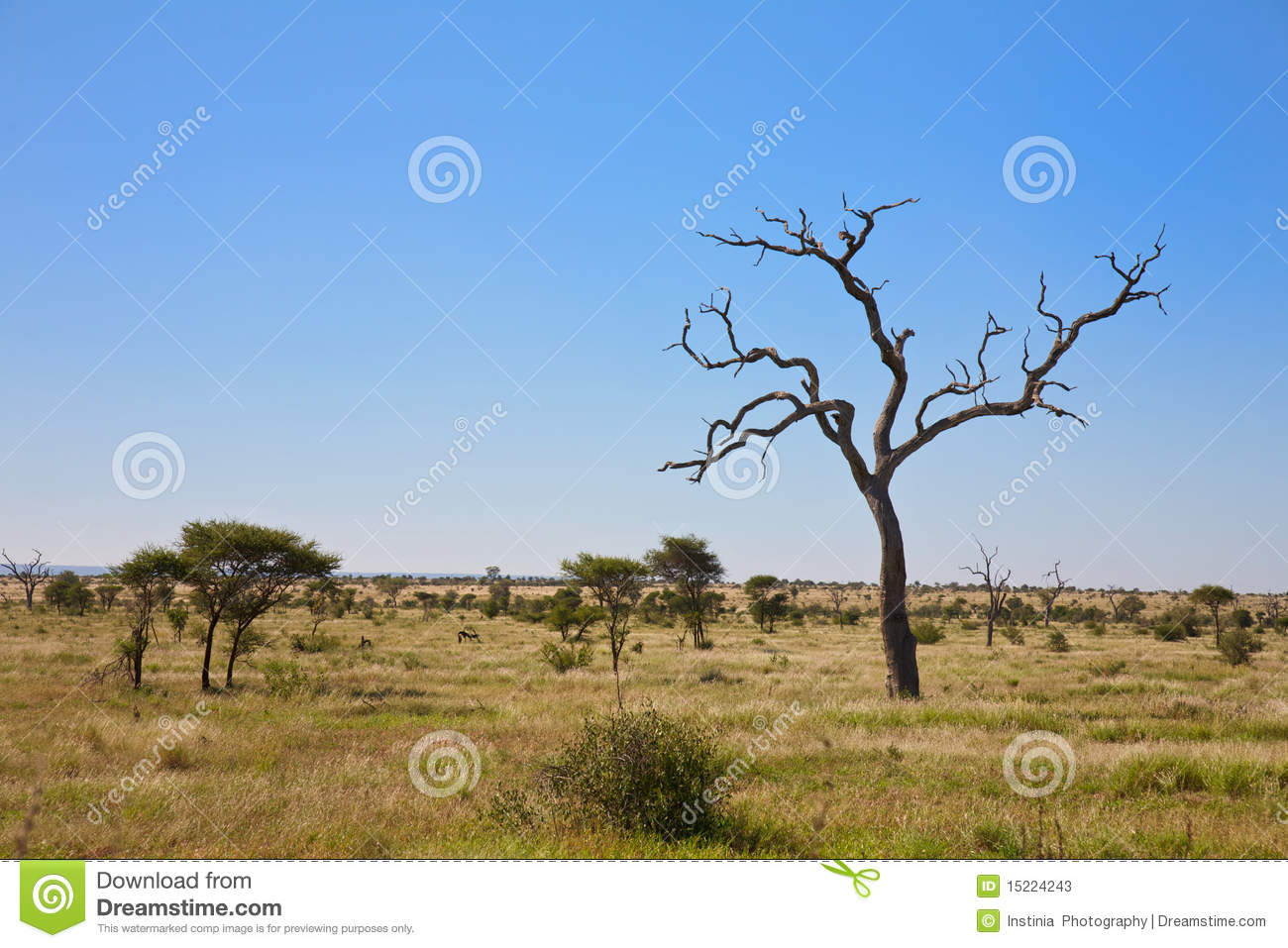 Savanna Bush Veld With Trees, South Africa Stock Photos.