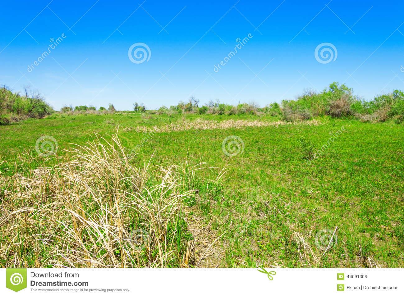 Steppe, Prairie, Veld, Veldt Stock Photo.