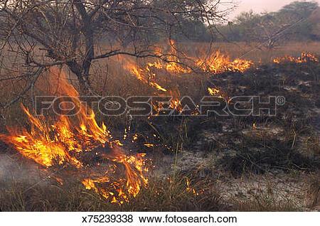 Pictures of veld fire futi corridor southern mozambique x75239338.