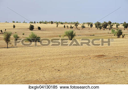 Stock Image of Veldt, Aleg, Brakna region, Mauritania, Africa.