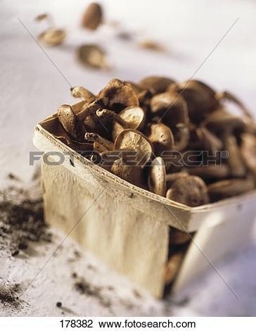 Stock Photo of Fresh forest mushrooms in a woodchip box (Velvet.