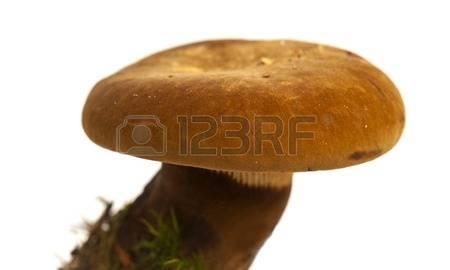 Velvet Foot Stock Photos & Pictures. 278 Royalty Free Velvet Foot.