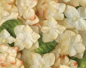 Velvet hydrangea.
