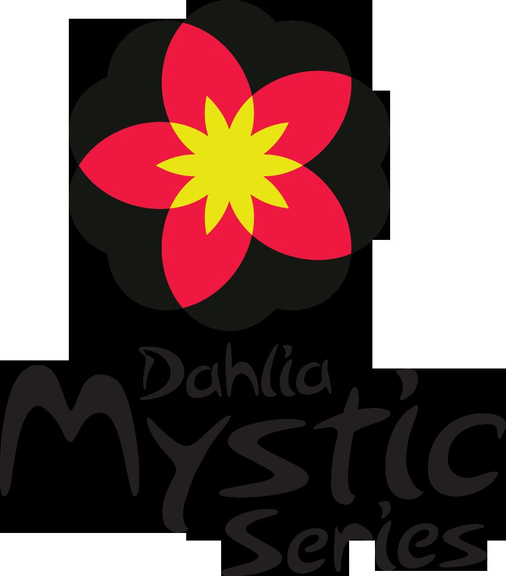 Dahlia Mystic Wonder ('Velvet'PBR).