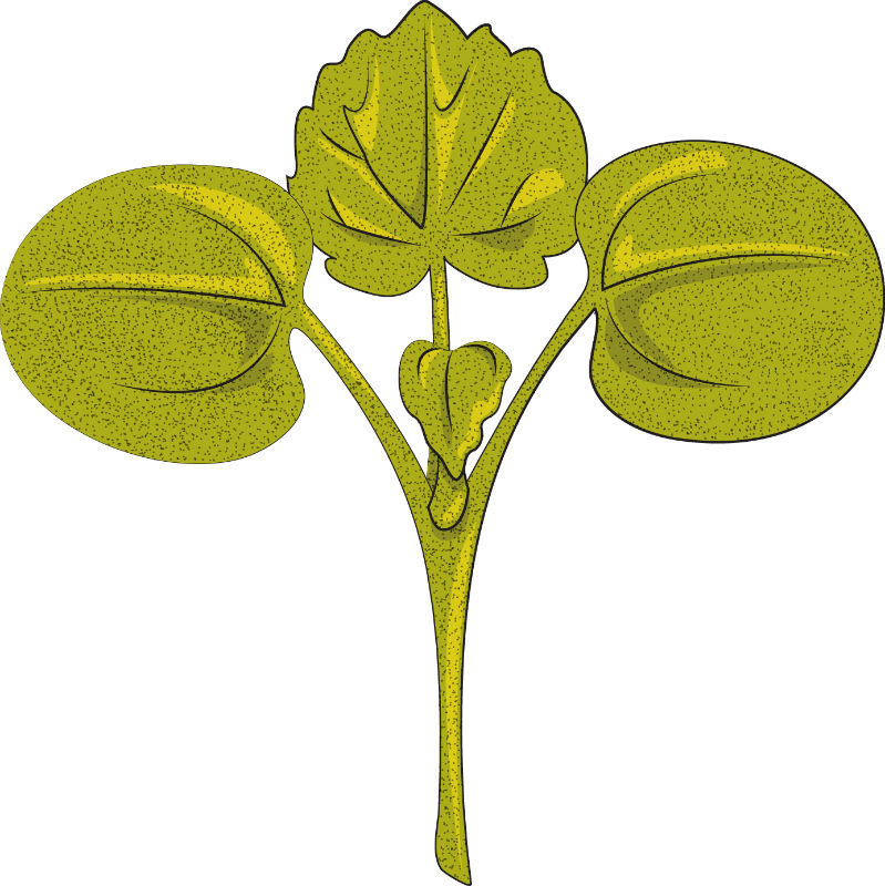 Weed seedling identification : Weed management : University of.