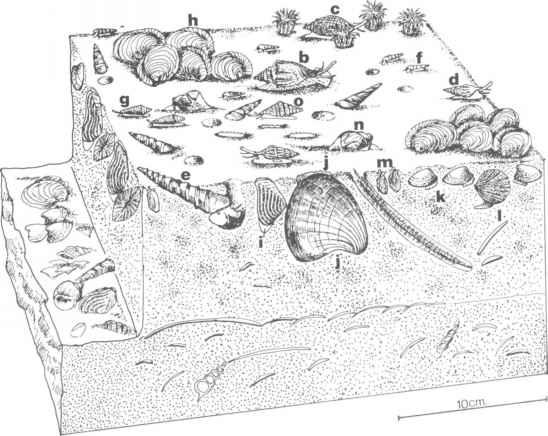 Palaeogene.