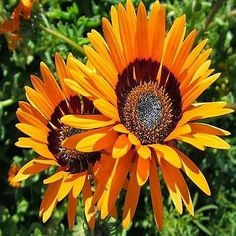 Flower seeds, The sun and Seeds on Pinterest.