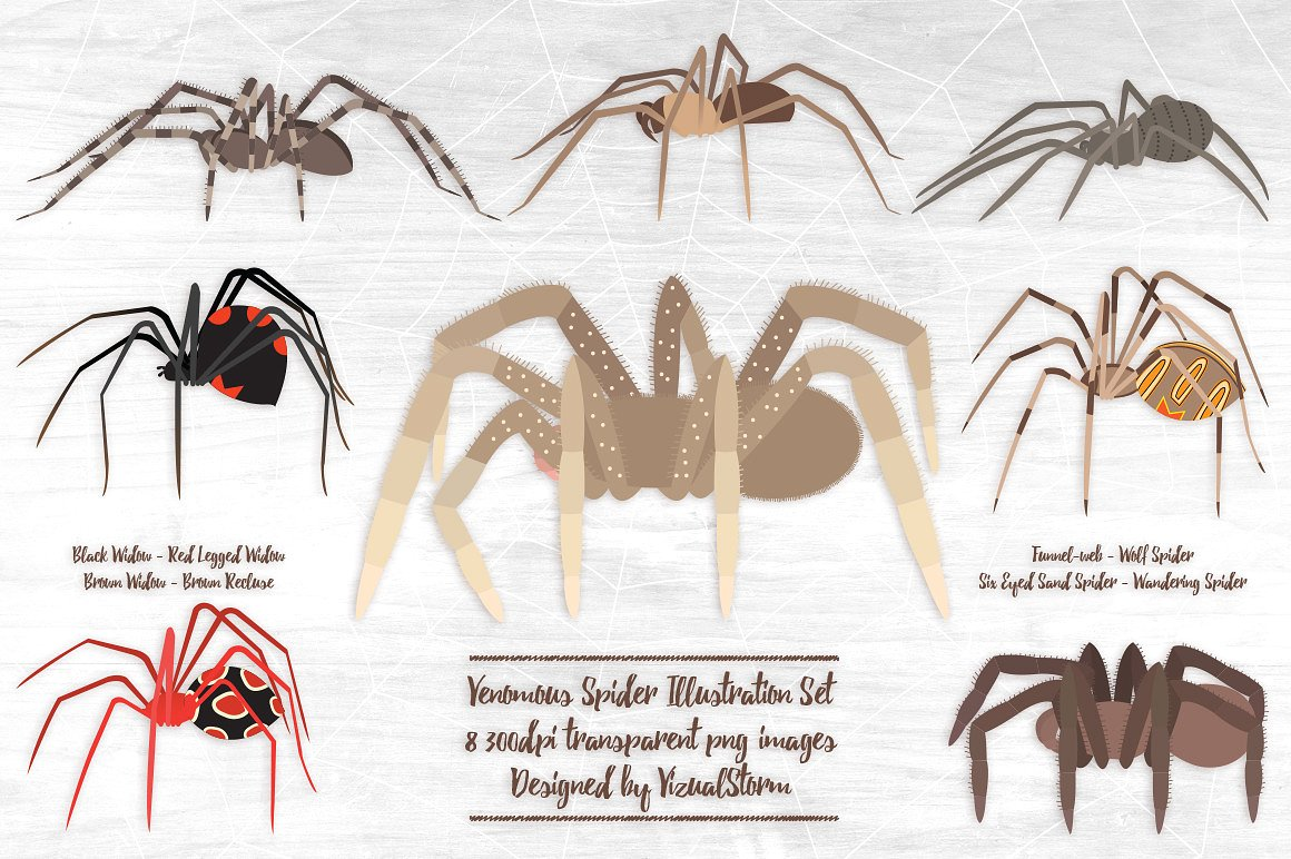 Venomous Spider Illustrations ~ Illustrations on Creative Market.