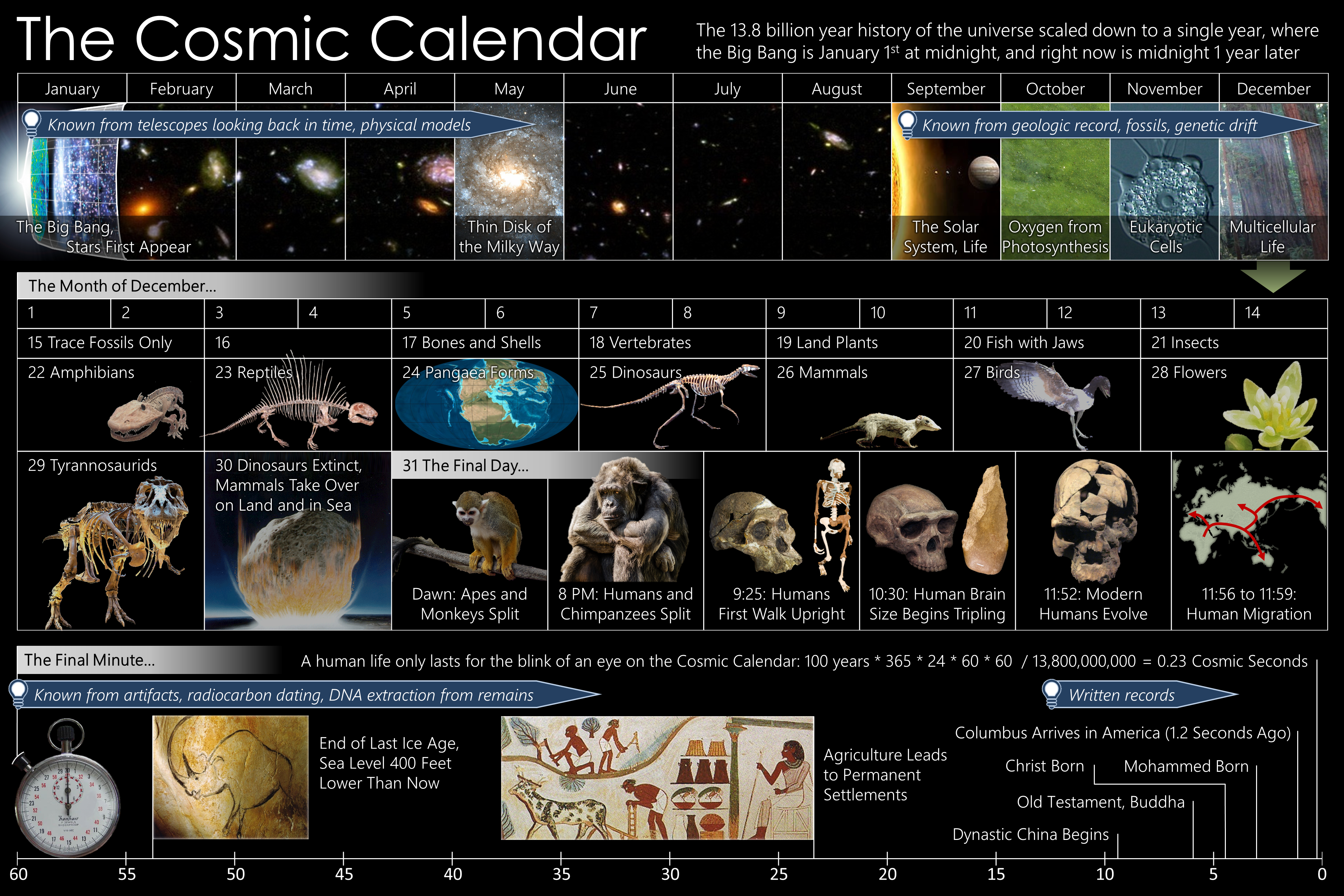 Archivo:Cosmic Calendar.png.
