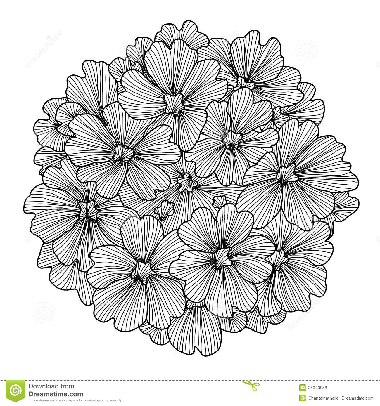 Decorative Verbena Flower Royalty Free Stock Photos.