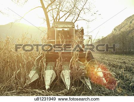 Stock Photograph of Farmer driving harvester in sunlit field.