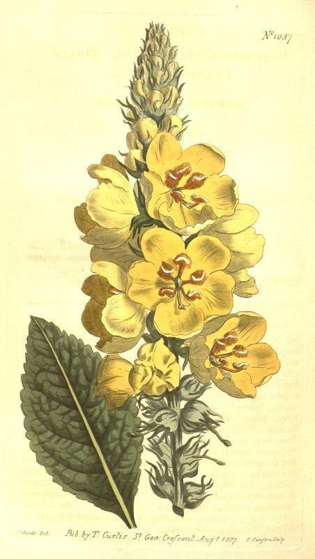 1000+ images about Botanical Art on Pinterest.