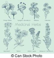 Verbascum densiflorum Clip Art Vector Graphics. 2 Verbascum.