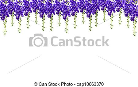 Stock Illustrations of Violet color of Duranta erecta L.