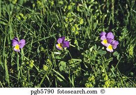 Clump grass Images and Stock Photos. 804 clump grass photography.