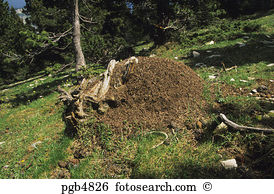Anthill Images and Stock Photos. 1,485 anthill photography and.