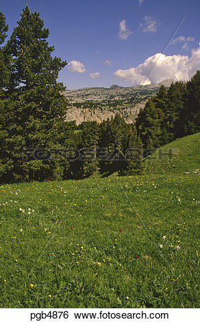 Stock Images of Mountain pasture carpeted with spring flowers.