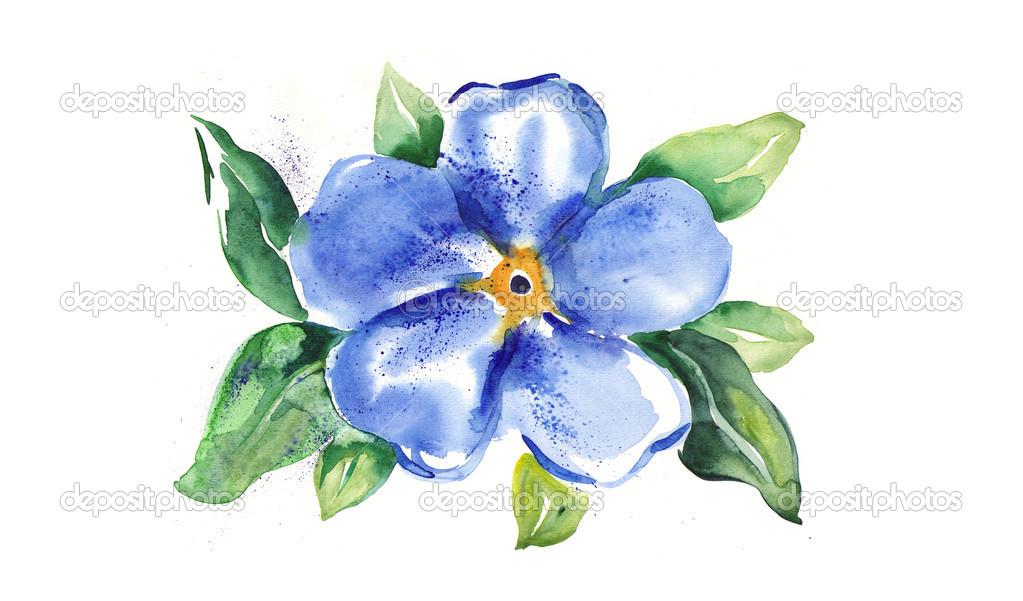 Blumen vergissmeinnicht — Stockfoto © M.Grau #37969501.