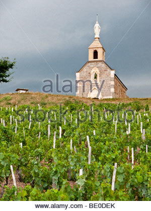 Winegrowing Stock Photos & Winegrowing Stock Images.
