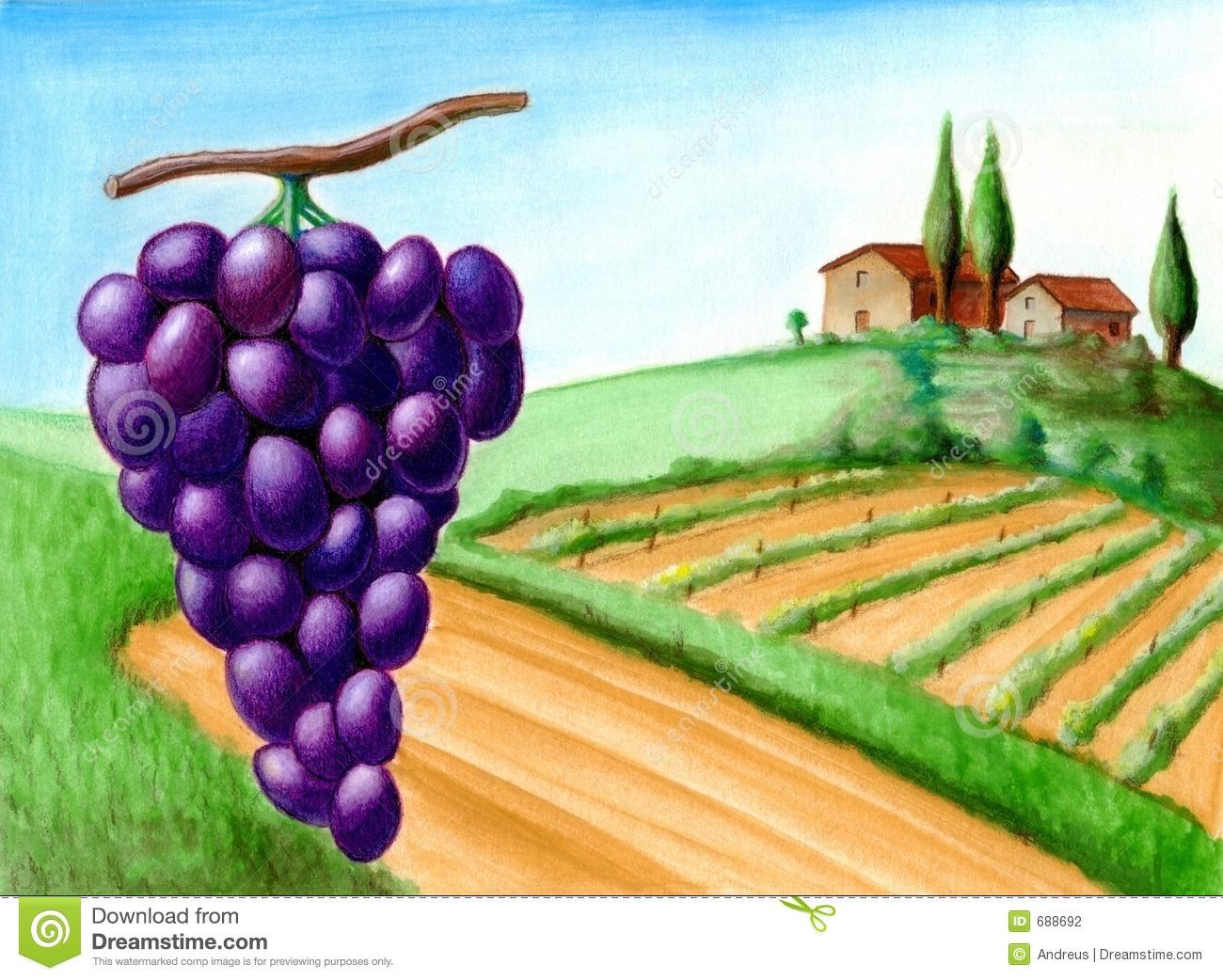 Vineyard Stock Illustrations.