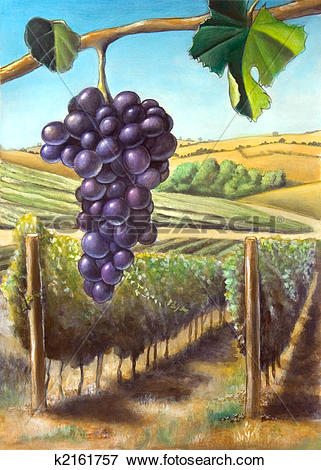 Stock Illustration of Grape and vineyard k2161757.