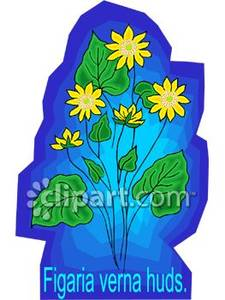 Figaria_Verna_Huds_Daisy_Royalty_Free_Clipart_Picture_081029.