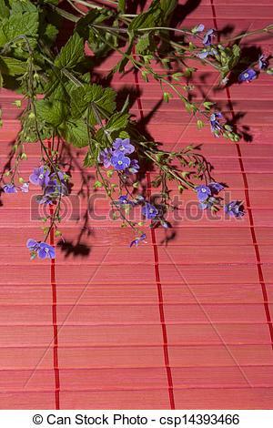 Stock Image of Veronica chamaedrys flowers.