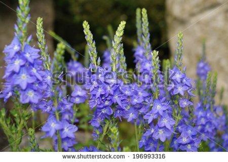 Moder Flower Pattern Stock Photos, Royalty.