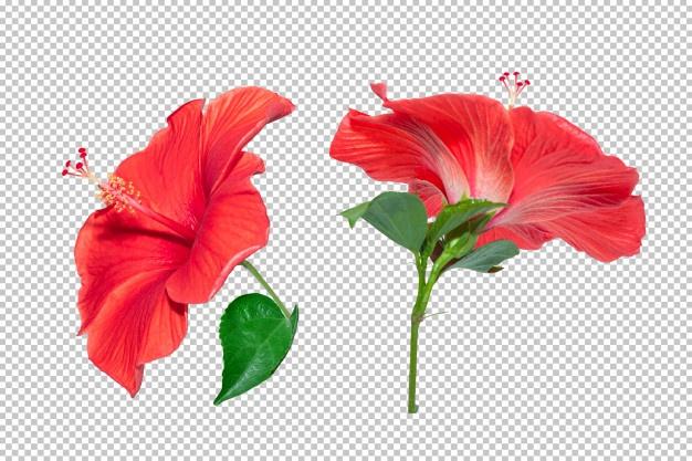 Flourish Vectors, Photos and PSD files.