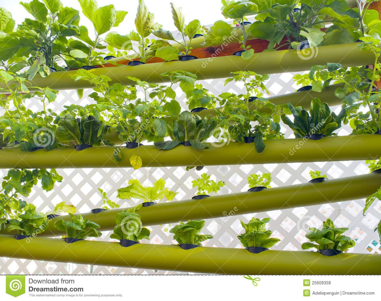 Vertical Garden Stock Photos.