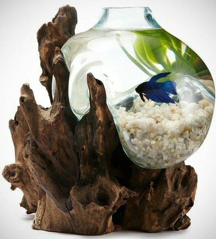 1000+ ideas about Kleines Aquarium on Pinterest.