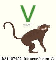 Vervet Clipart Royalty Free. 17 vervet clip art vector EPS.
