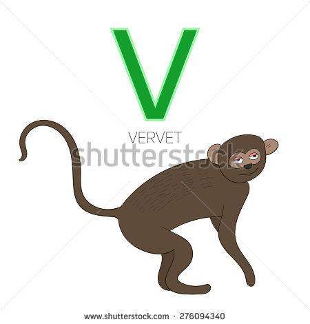 Vervet Stock Vectors & Vector Clip Art.