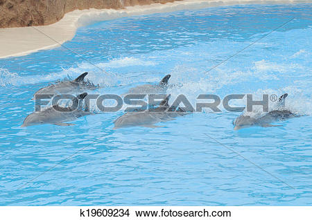 Stock Photo of Grey Dolphin on a Very Blue Water k19609234.