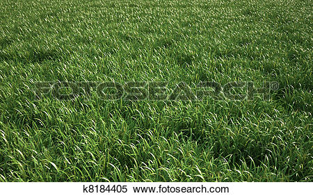 Stock Illustration of Very green and fresh looking grass. k8184405.