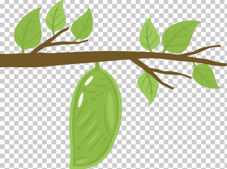 The Very Hungry Caterpillar Monarch Butterfly PNG, Clipart.