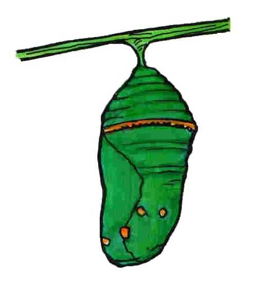 Butterfly Hungry Caterpillar Clipart.