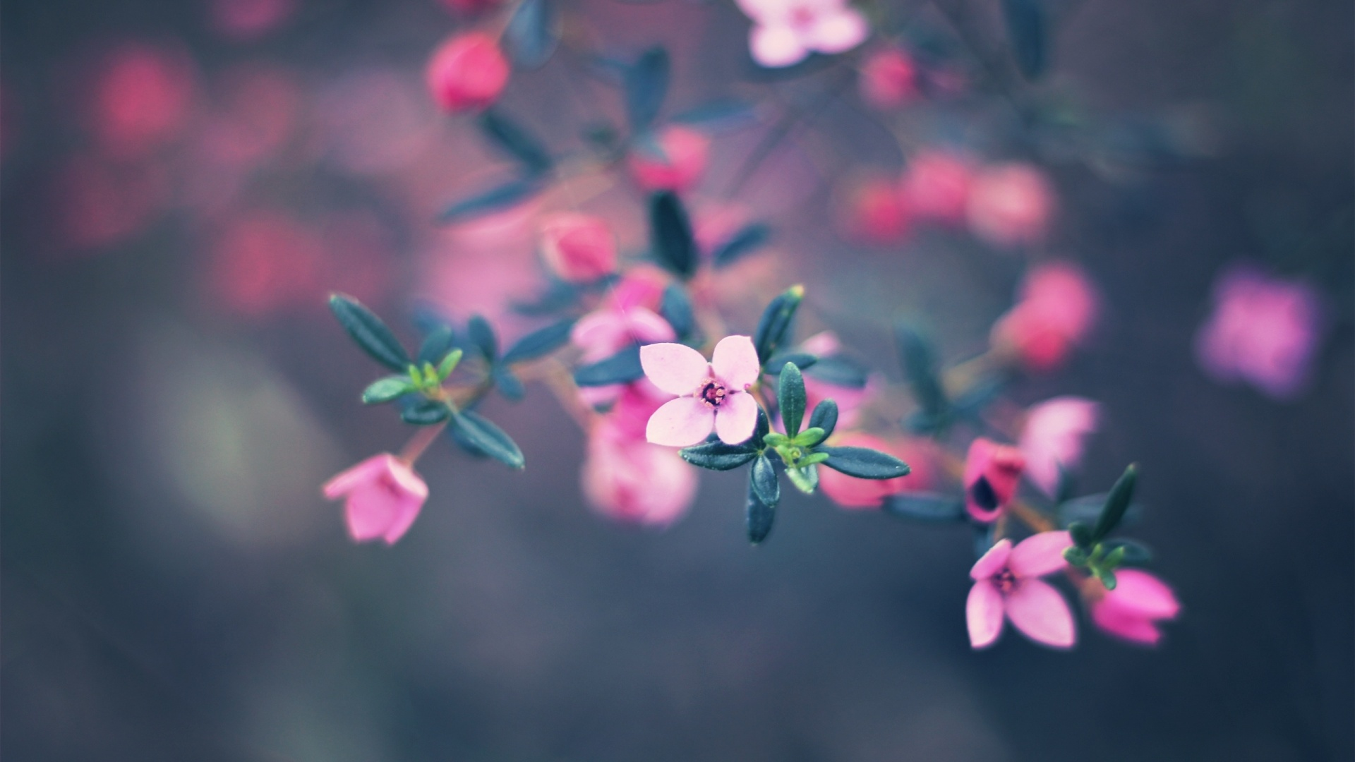 Very Small Pictures Of Flowers.
