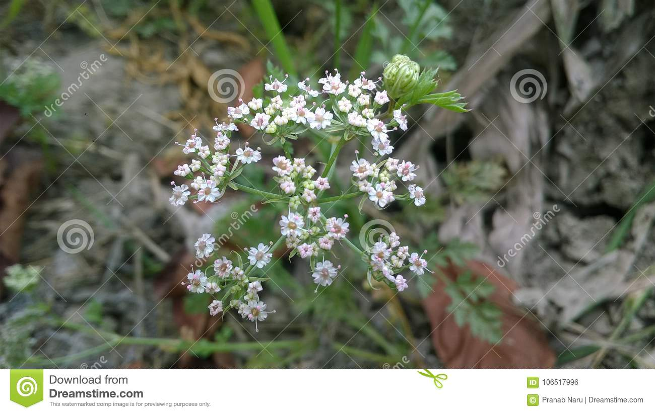 Very small flowers stock photo. Image of very, nature.
