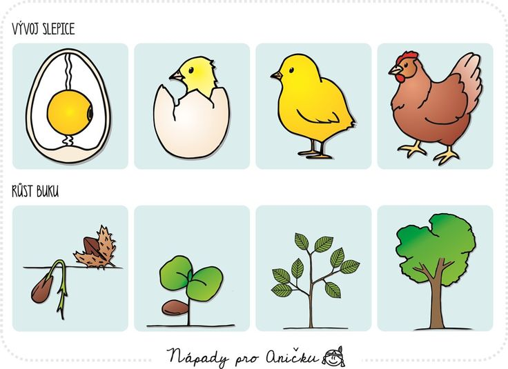 1000+ images about Zvieratá on Pinterest.