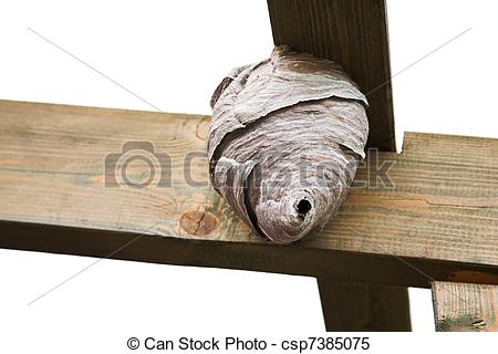 Stock Images of vespiary.