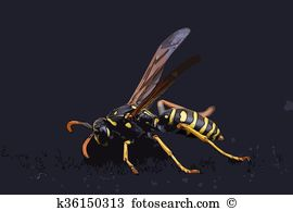 Vespidae Illustrations and Stock Art. 3 vespidae illustration and.