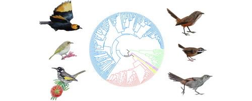 Molecular Phylogenetics and Evolution.