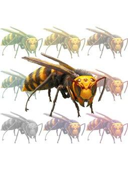 Hornet, Vespinae clipart graphics (Free clip art.